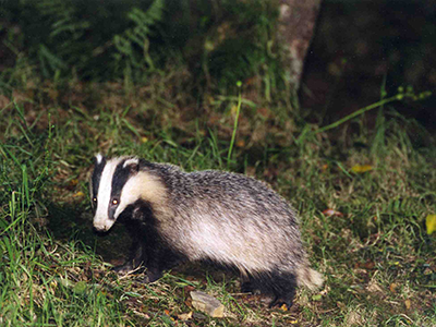 Badgers-003