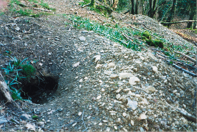 badger-hole-2