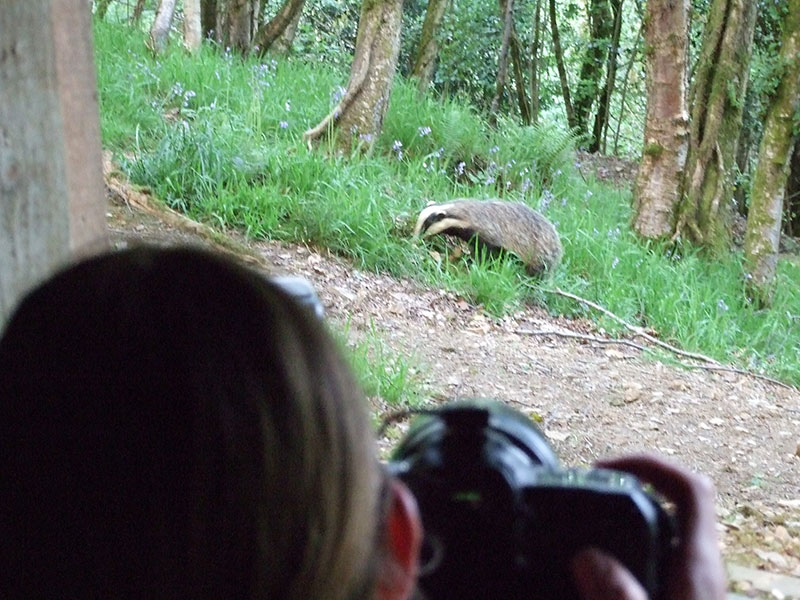 badger-photography